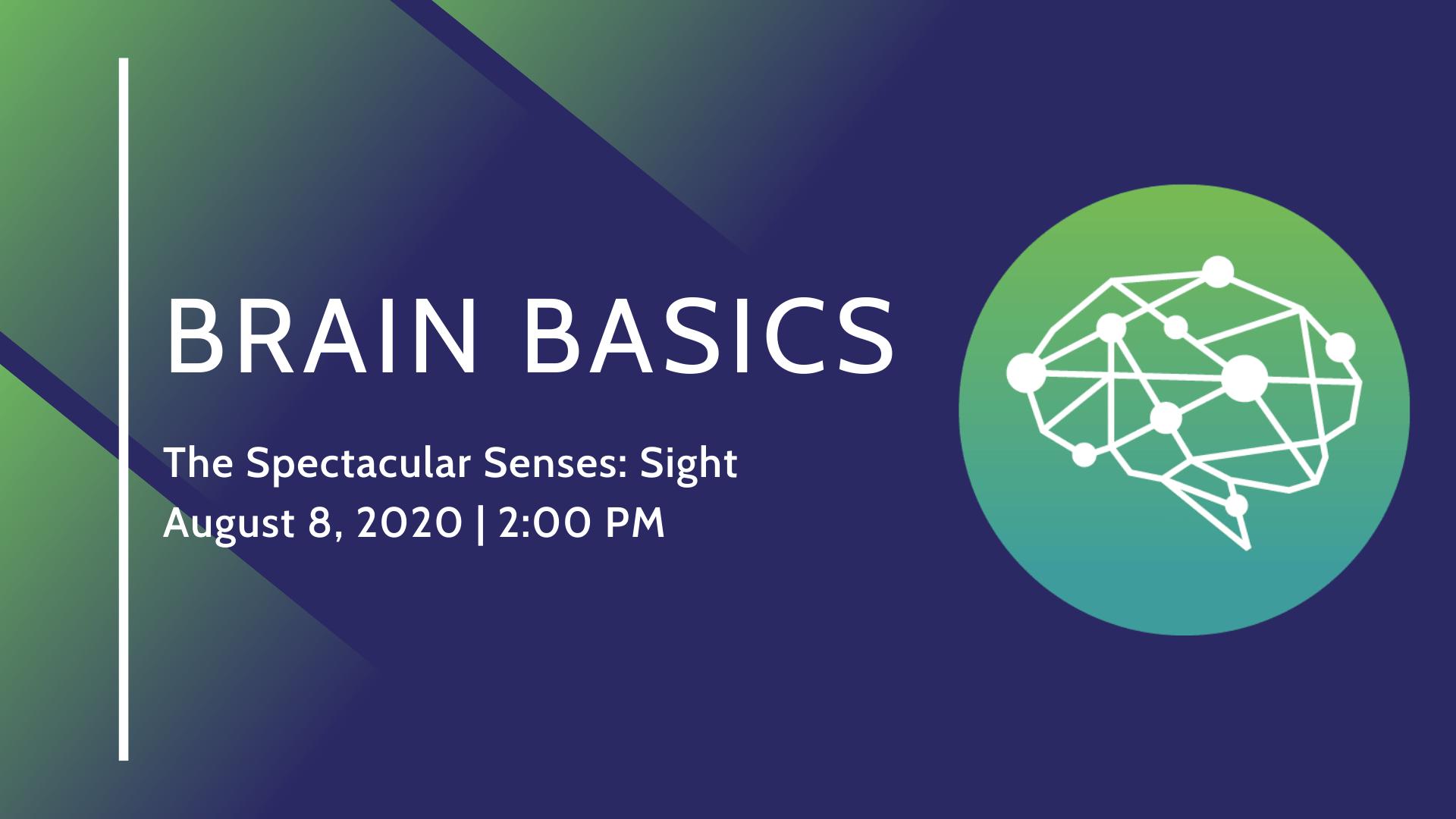 Brain Basics_The Spectacular Senses: Sight